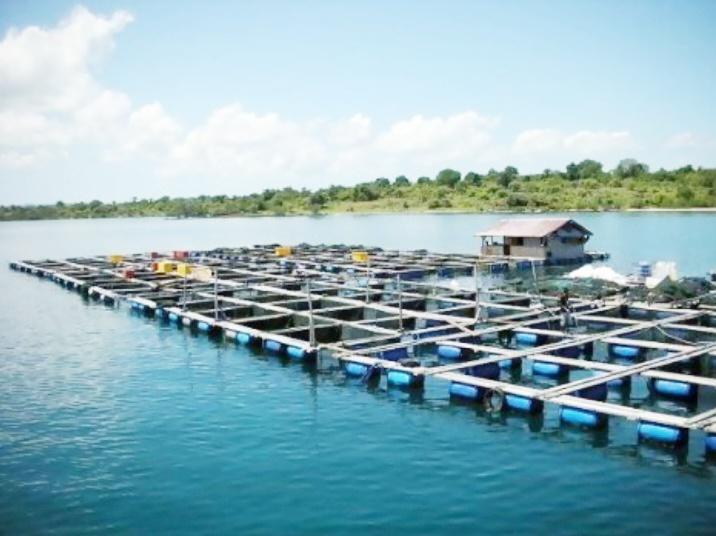 2.000 Keramba Akan Diangkat dari Danau Maninjau