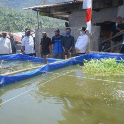 Dorong Ekonomi Masyarakat, Karang Taruna Sawahlunto Kelola Usaha Budidaya, Jahe 110 Merah dan Ikan Nila