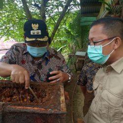 Kadishut Sumbar Dukung Pengembangan Madu Lebah Trigona Sawahlunto