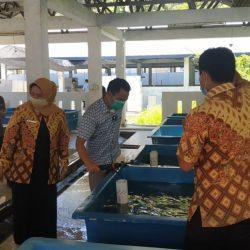 Kunjungi BBIP Teluk Buo, Indra: Target PAD dari DKP Sumbar Perlu Digenjot lagi