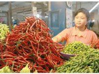 Harga Cabe di Pasar Lubuk Basung Capai 80 Ribu per Kilo